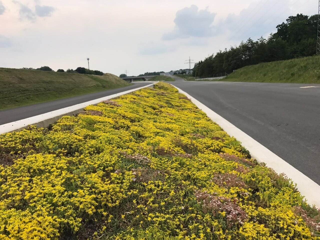 Can Railways And Motorways Be Called Green Infrastructure